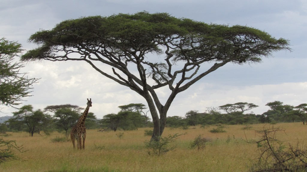DW-Tanzania-6