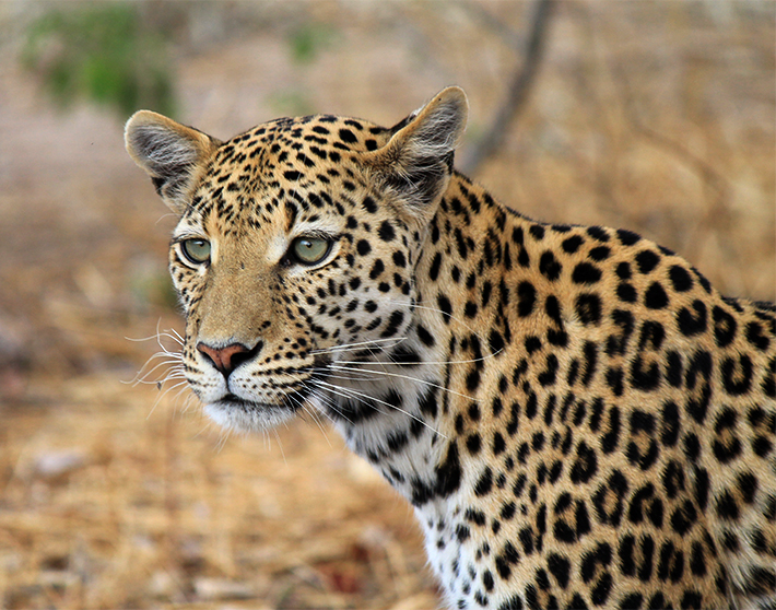 Kristina-Southern-Africa-5