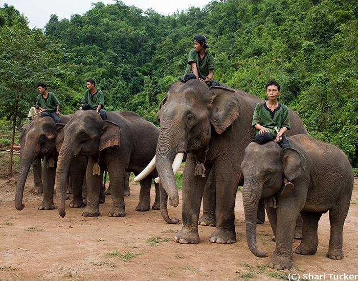 Shari-Myanmar-8