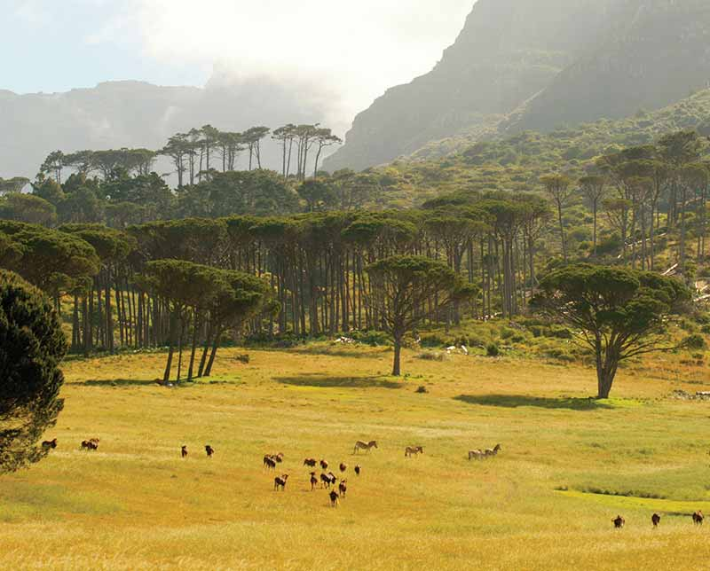 Forest landscape. Botswana, Africa.