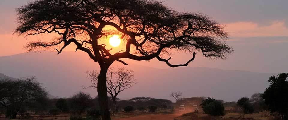 Distant sunrise behind a tree. Kenya, Africa.