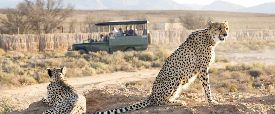 Safari. South Africa, Africa