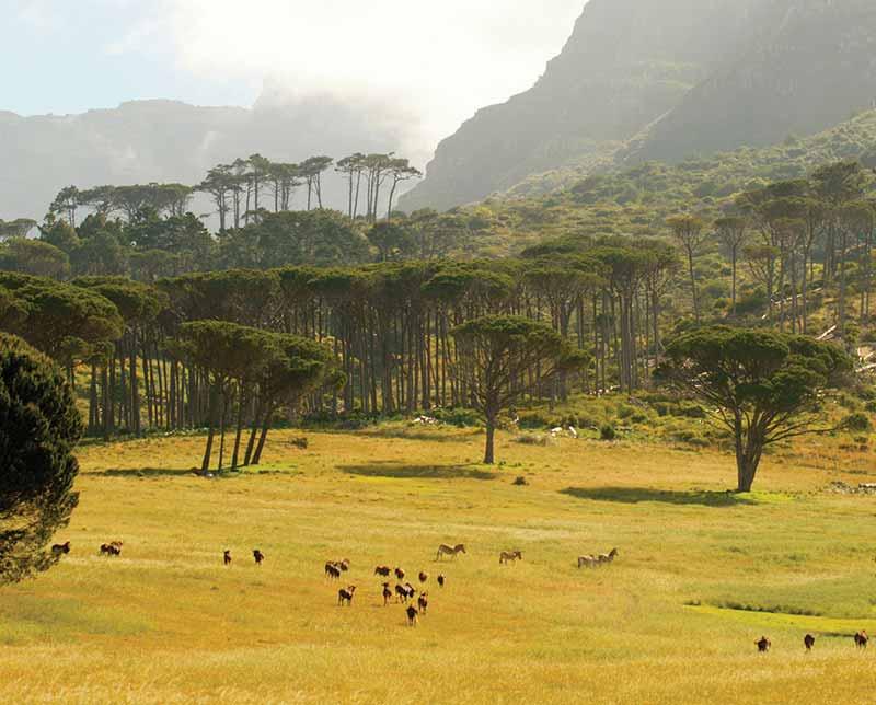 Forest landscape. Zimbabwe, Africa