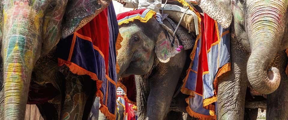 Elephants. India, Asia.