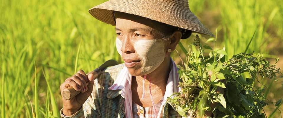 Farming. Myanmar, Asia.