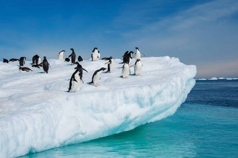 Penguins on a glacier. Antarctica.