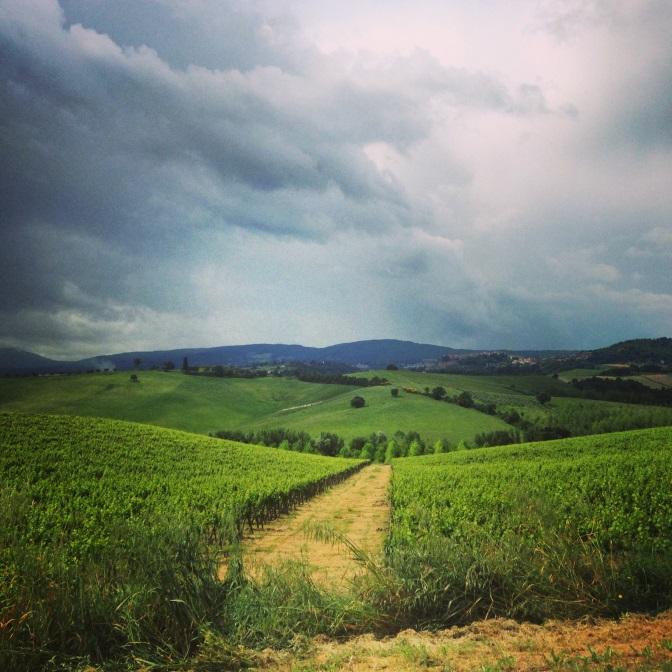 Tuscan fields.