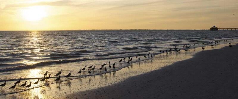 Birds on a beach. Fort Myers and Sanibel, Florida.