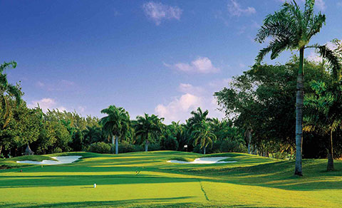 Golf course with palm trees. Jamaica.