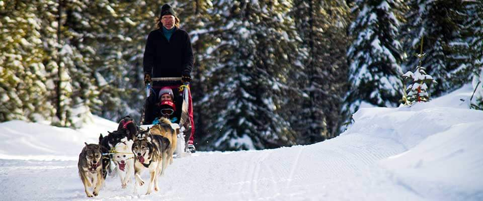 Dog sledding. Big White, BC.