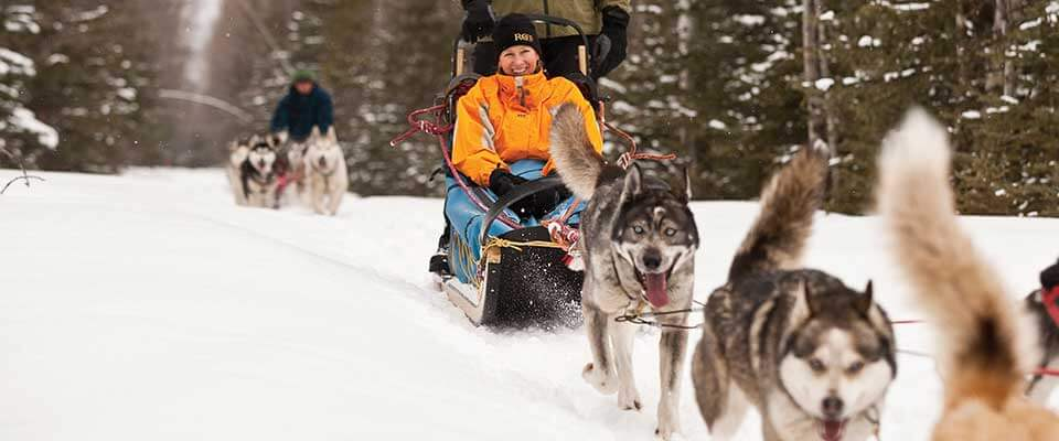 Dog sledding. Fernie, BC.