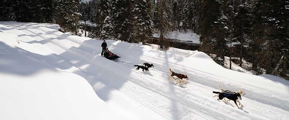 Dog sledding. Whister, BC.