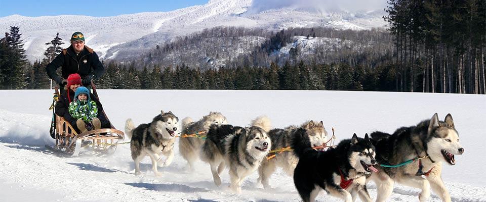 Dog sledding. Mont Tremblant, Quebec.