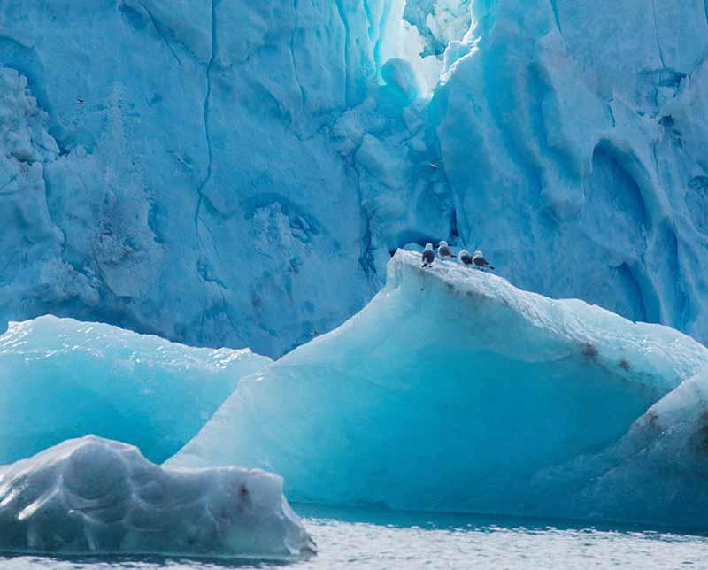 Adv-Polar-Regions-Arctic-Realm-of-the-Polar-Bear-800