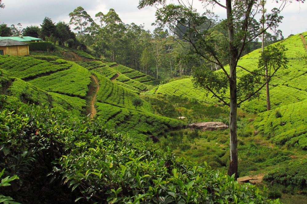 Sheryl-Sri-Lanka (6)