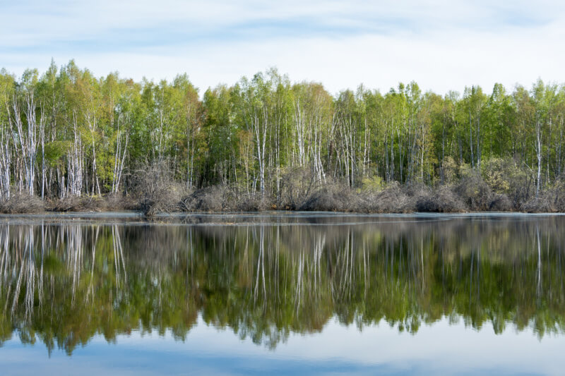 Boreal Forest at Creamers Field in Fairbanks, Alaska
