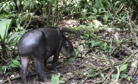 Taiper – Braulio Carillo National Park