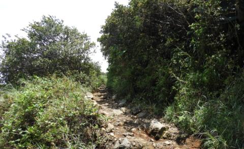 The trail up Santa Ana Volcano - Cerro Verde National Park
