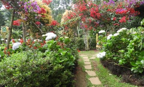 The gardens of Café Entre Nubes